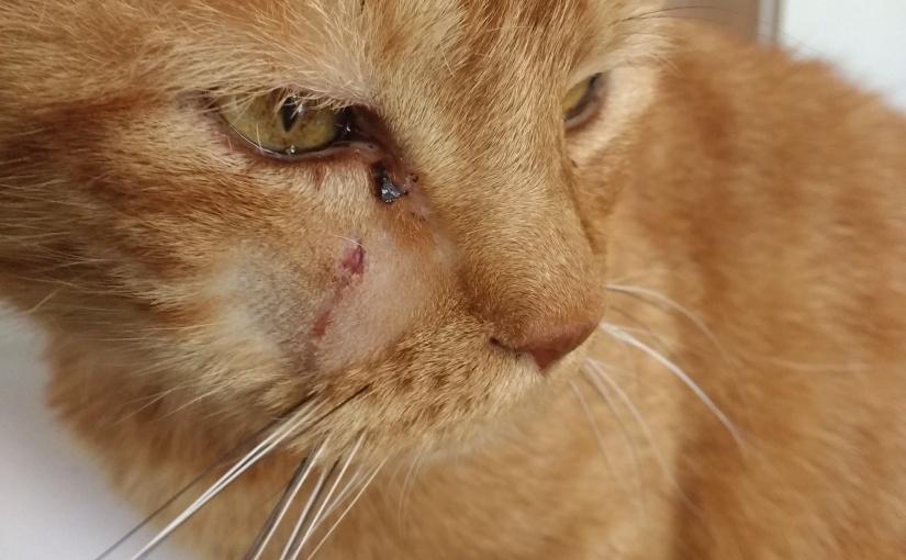 Many scars
